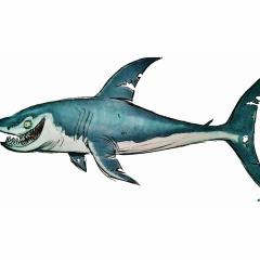 frankie-shark-01
