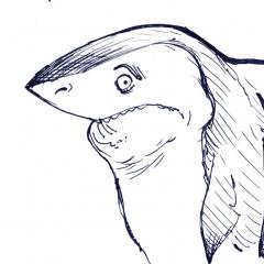 shy-shark