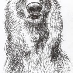 DoodleSoup134